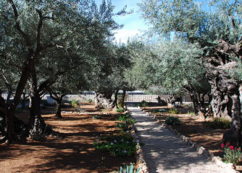 The Garden of Gethsemane, Jerusalem